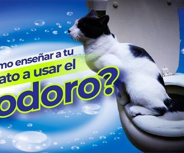 Como enseñar a tu gato a ir al baño y usar el inodoro paso a paso, esto cambiará tu vida