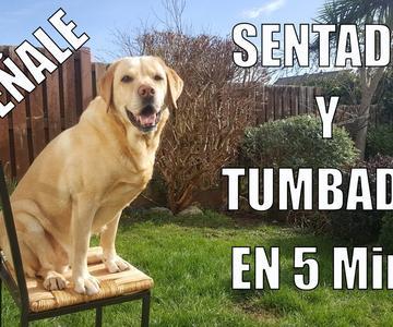 Enseña a tu Perro a Sentarse y Tumbarse en 5 min