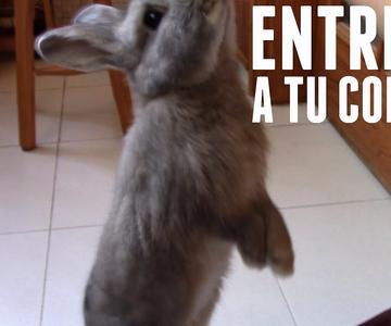 Enseña trucos a tu conejo