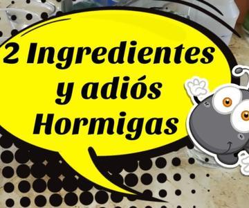 🐜Kill Ants FOREVER | Home Remedy🐜#adaespinosa #amodomio#ants#homeremedy